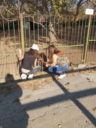 Един страхотен ден в Зоологическата градина в град Ловеч - Изображение 3
