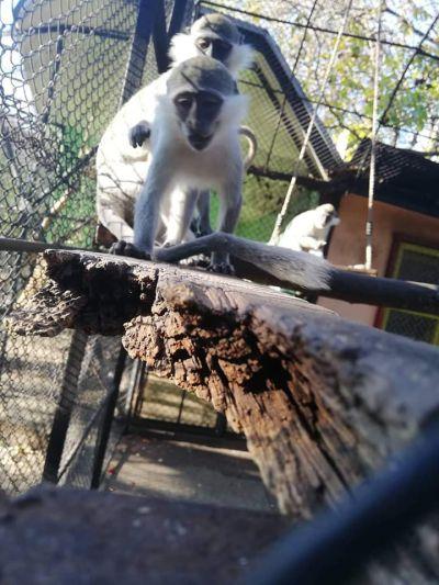 Един страхотен ден в Зоологическата градина в град Ловеч - Изображение 6